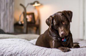 מיטה אורטופדית לכלב